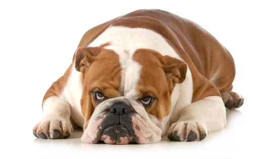 Esto es lo que tu perro odia