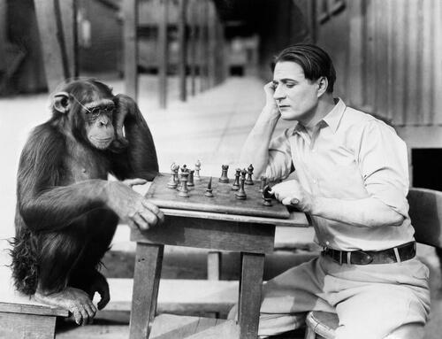 Cuál es el mono más inteligente