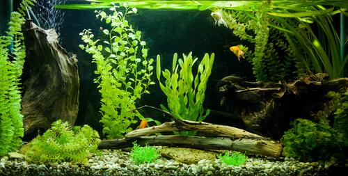 Cuidados del acuario para peces