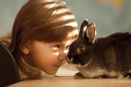 Todos los cuidados para la cría de conejos