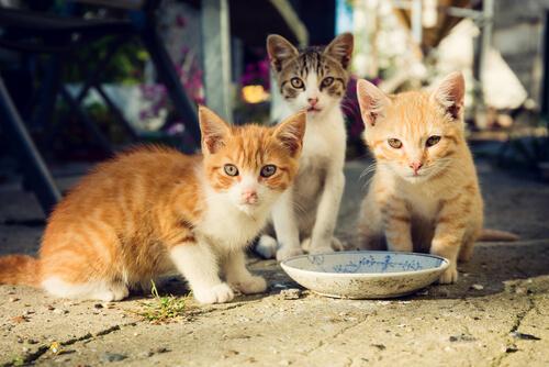 ¿Cómo cuidar a los gatos de una colonia?