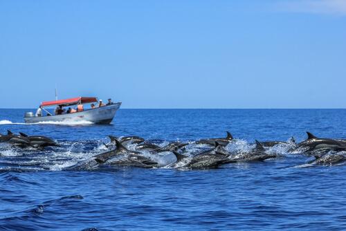 Delfines en Baja California
