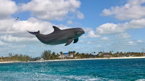 Delfines en las Bahamas
