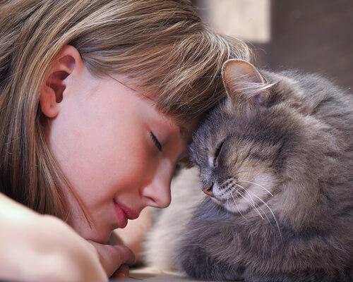 ¿Cómo demostrar a tu gato que le quieres?