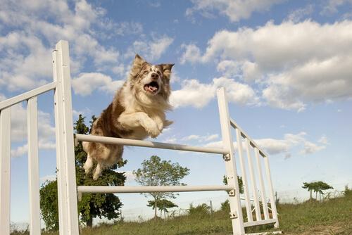 5 deportes caninos