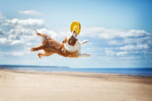 Disc Dog: perros que juegan con discos