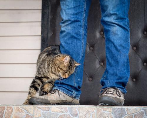 Educar a un gato para que sea cariñoso