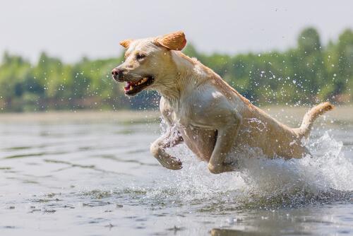 ¿Cómo puedes ejercitar correctamente a tu perro?