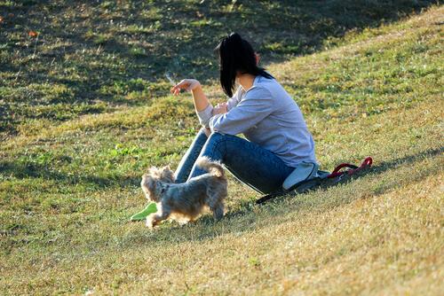 El humo del tabaco afecta a los perros