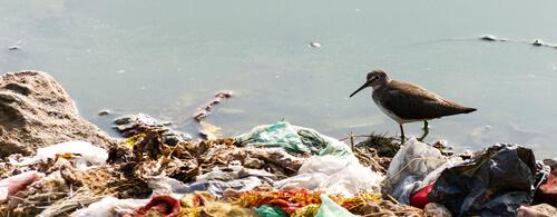 El plástico mata animales