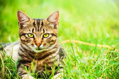 5 razones para elegir un gato mestizo