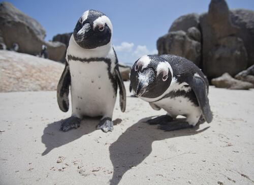 ¿Cuántas especies de pingüinos existen?