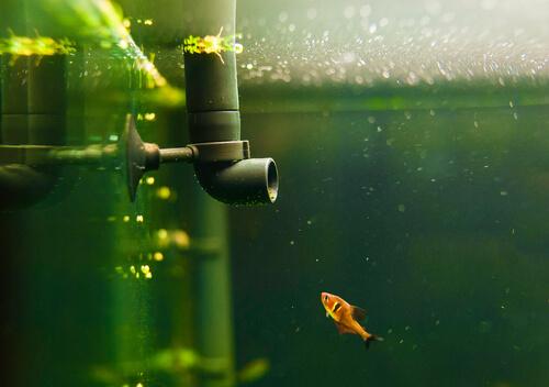 4 tipos de filtros ideales para el acuario
