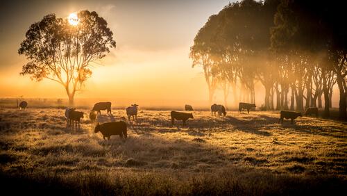 ¿Qué es la ganadería extensiva?