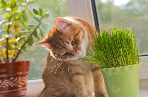 Gato se come las plantas