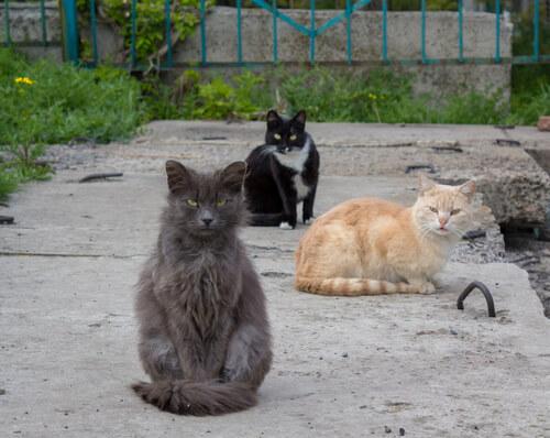 Gatos callejeros: qué hacer