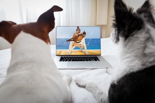 Grabar vídeos a mascotas