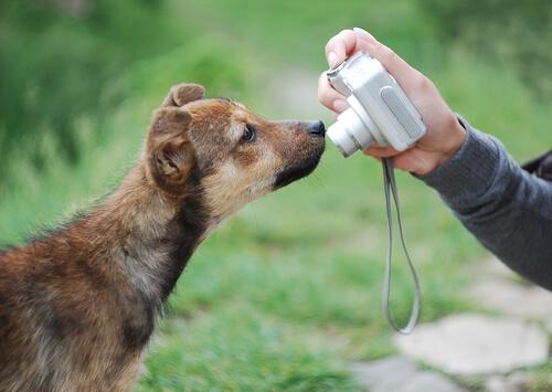 Tips para hacer buenas fotos a tu perro