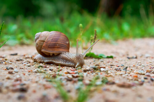 Información sobre el caracol