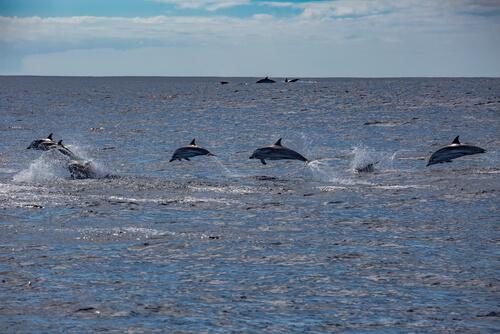 Islas Azores: delfines