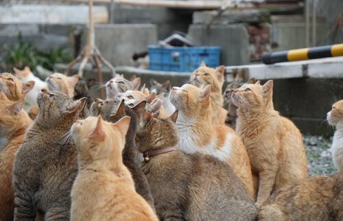 Las islas de los gatos en Japón