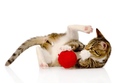 Juegos De Inteligencia Para Tu Gato Mis Animales