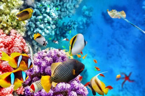 La fauna de la Gran Barrera de Coral