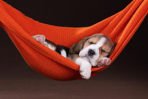 ¿Las mascotas pueden soñar?