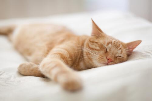 Las mascotas sueñan