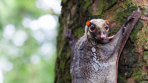 5 especies de animales arborícolas