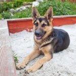 Entrena A Tu Perro Para Usar La Caja De Arena Mis Animales