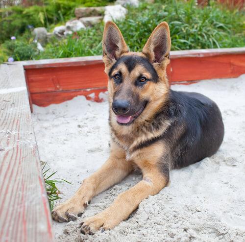 Entrena a tu perro para usar la caja de arena