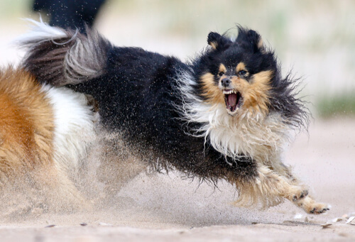 5 recomendaciones para manejar la agresividad de mi perro