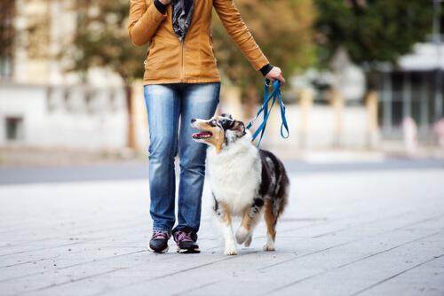 Manejo de la correa del perro