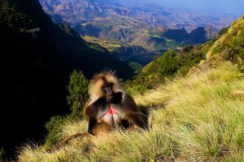 Parque Nacional de las montañas Simien