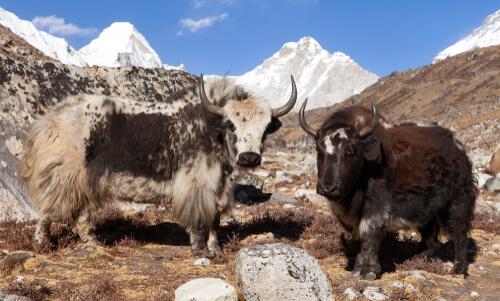 Parque nacional del Himalaya