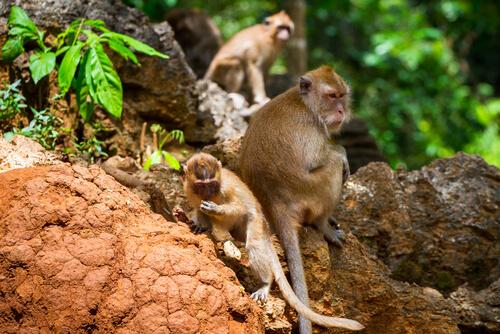 Parque nacional Khao Sok de Tailandia