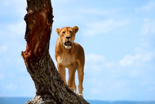 5 parques nacionales de África que no te puedes perder