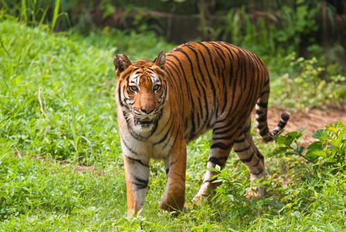 5 parques nacionales de Asia imperdibles