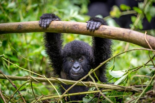 Parque Nacional Virunga