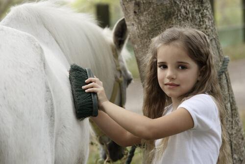 El pelaje de tu caballo: cepillado y alimentación