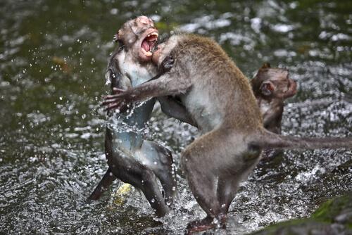 Pelea de animales salvajes a muerte