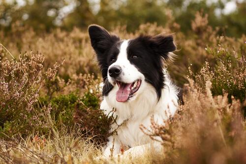 Ajax, el perro que salva animales como las aves amenazadas en peligro de extinción