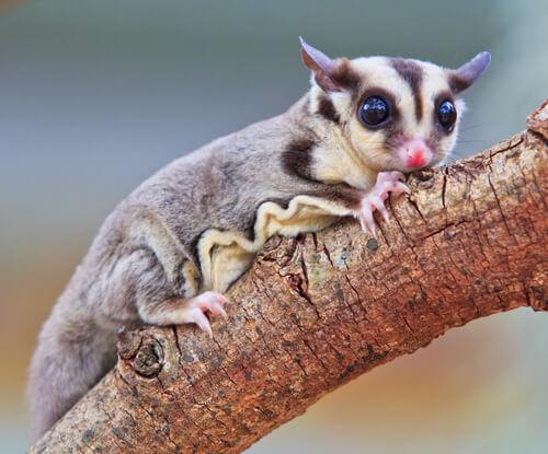 La fauna de Guinea