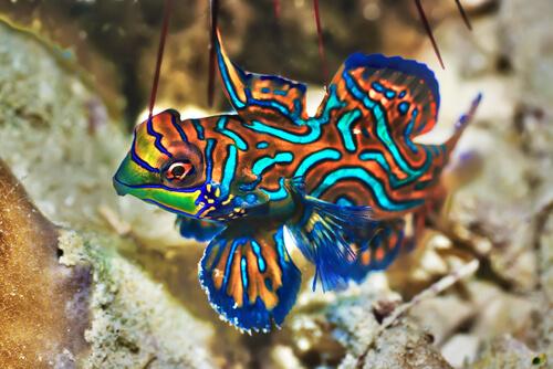 Los 5 peces más hermosos del mundo animal