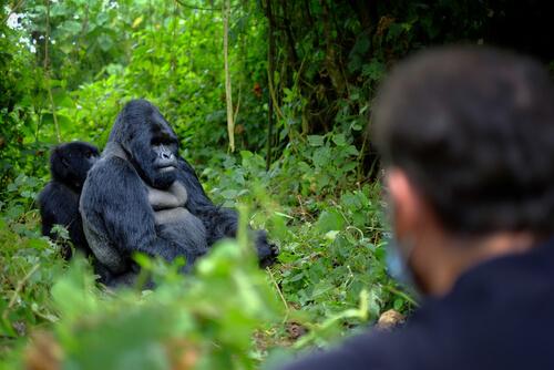 6 guardas asesinados por proteger a los gorilas
