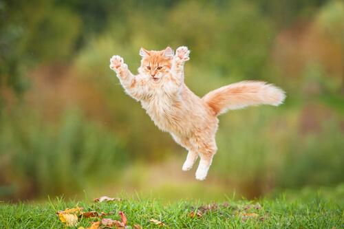 ¿Qué le hace feliz a tu gato?