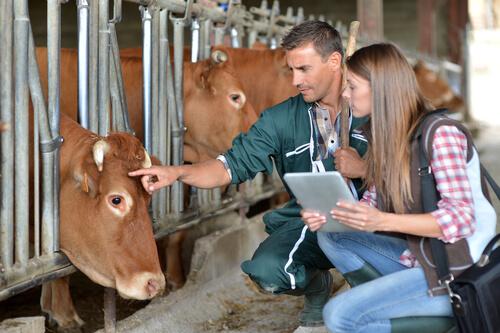 ¿Qué es lo que hacen los veterinarios?
