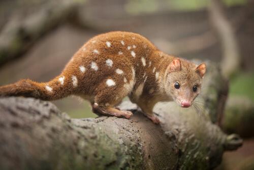 La fauna de Australia: descubre los animales endémicos del país