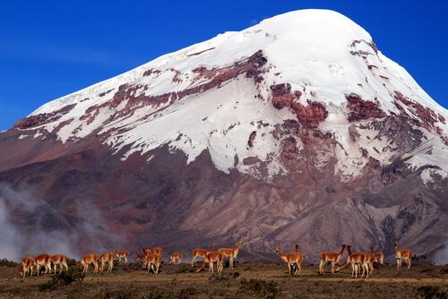 Reserva de producción faunística Chimborazo (Ecuador)